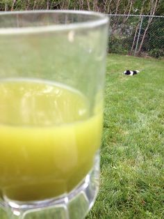 Janice Numan is enjoying some Melon Ball Matcha while watching her new puppy play outside. Life couldn't be sweeter!