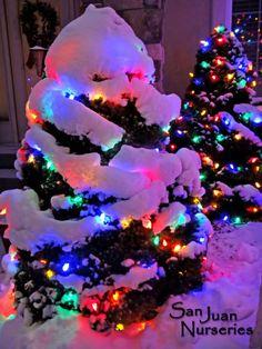 Holiday Quotes Christmas, Live Christmas Trees, Christmas Scenery, Colorful Christmas Tree, Christmas Mood, Christmas Wishes, Christmas Pictures, Christmas Colors, Rustic Christmas