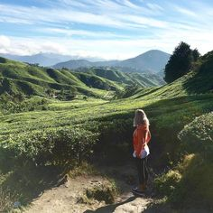 Lovely morning at Boh Tea Plantation in Cameron highlands #travelbloggers #travel #malaysia  Who knew tea could be so beautiful and photo worthy? blogger bbloggers katielewla blogginggals beautyblogger