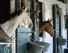 Free online library of equine nutrition, health, and management articles | Kentucky Equine Research