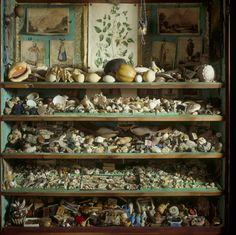 Collection of 18th-century curiosities including many shells in the mahogany secretaire bookcase from the Library at A La Ronde, Devon.