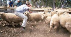 Sheep farming Sheep Farm, Farming, Australia, The Incredibles, Culture, Travel, Viajes, Destinations, Traveling
