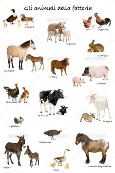 Collage of farm animals in Italian in front of white background, studio shot