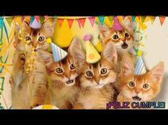 ¡FELIZ CUMPLEAÑOS cancion DIVERTIDA! Cantada por, Gatitos Perritos niños infantil ANIMADO - YouTube