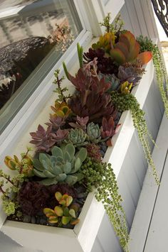 succulent planter box from simply succulents garden plants Succulent Landscaping, Succulent Gardening, Garden Planters, Succulent Planters, Balcony Planter Box, Container Gardening, Outdoor Planter Boxes, Long Planter, Window Planter Boxes