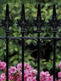 wrought iron gate with azaleas