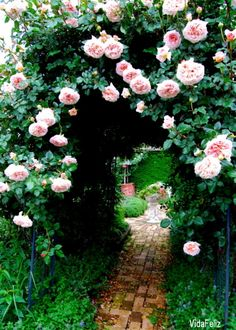 ... through the rose arbor...