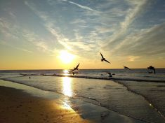Nature is magic - seagulls enjoy the sundown North sea - the Netherlands - For a short personal message - for a sea lover - as a gift - or to frame it! North Sea, Frame It, A5, Netherlands, Postcards, Sunset, Nature, Prints, Outdoor