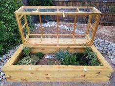 Outdoor habitat for Ornate and Desert Box Turtles.  Easy access.  Predator proof