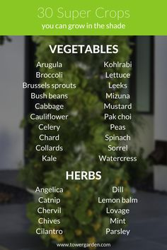 30 Vegetables and Herbs You Can Grow In the Shade                                                                                                                                                                                 More