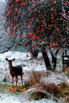 Snow, Deer, Red Apples