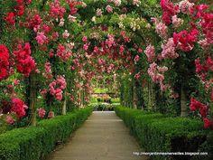 My secret garden :) I wish