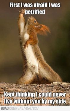 Dramatic squirrel dancing and singing.