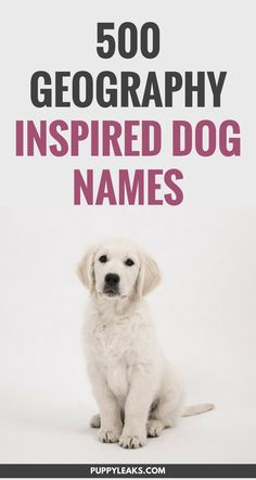 If you're looking for a geography themed name for your new dog you've come to the right place. From world capitals like Oslo to the Hari river, there's a lot of cool names to choose from. Here's 500 geography inspired dog names. Puppy Training Tips, Training Your Dog, Potty Training, Oslo, Best Dog Names, Girl Puppy Names Unique, Cool Pet Names, Cute Puppy Names, Puppies Tips