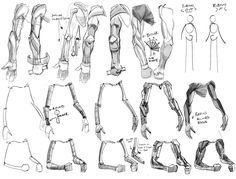 human-proportions:  From: pachurz:  Some building block references my Life Drawing teacher drew up for us for our Figure Drawing class. Thou...