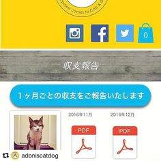 皆様、ありがとうございますm(_ _)m 本年もどうぞよろしくお願い致しますm(_ _)m  #Repost @adoniscatdog with @repostapp ・・・ 2016年12月度の収支報告を致します。 . チャリティーショップ売上 ¥48260 支援金 ¥36367 . 支援実績 ¥90123 . .  詳細はWEBサイトに掲載しました報告書にてご確認頂けます。 . プロフィールに記載しているURLからサイトを立ち上げ、トップページの記事から、もしくはメニューから「参加型ボランティアとは→収支報告」を開き、12月度のPDFをクリックして下さいね♪. . 引き続きアドニスの応援をお願いします!!. . #アドニスチャリティー #チャリティー  #アドニス  #保護活動  #ボランティア  #支援  #募金  #犬  #いぬ #保護犬  #愛犬  #わんこ  #猫  #保護猫  #愛猫  #ねこ #ネコ #にゃんこ  #殺処分ゼロ  #殺処分反対