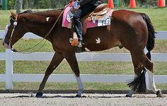 How to correctly collect and slow your horse through bending and balance. Helps with bringing head down.