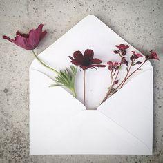 The Envelope Series 11