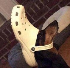 """39 Cursed Images That Are Just Plain Wrong - Funny memes that """"GET IT"""" and want you to too. Get the latest funniest memes and keep up what is going on in the meme-o-sphere. Funny Fails, Funny Dogs, Funny Memes, Silly Jokes, Funniest Memes, Funny Animal Pictures, Funny Animals, Cute Animals, Retarded Animals"""