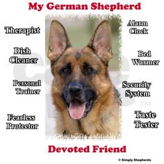 everything about #german #shepherd