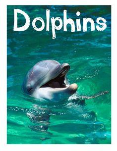www.homeschoolshare.com dolphin_lapbook.php