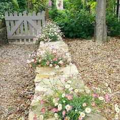 My neighbour's little garden wall is very pretty