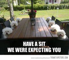 Have a sit…