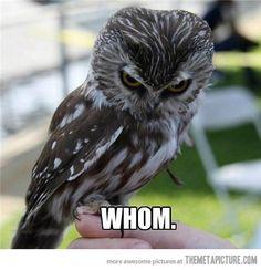 The grammar owl…