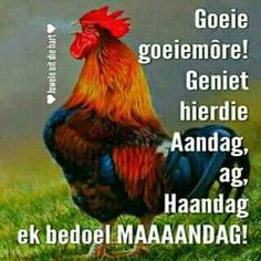 Lekker Dag, Goeie More, Special Quotes, Afrikaans, Good Morning Quotes, Cute Quotes, Happy Monday, Humor, Garden