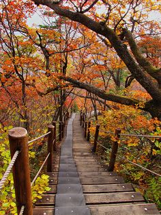 Fall colors on the path to Baemsagol valley in Jirisan National Park, South Korea (by mikemellinger).