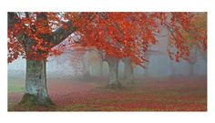 Art Effects Arboles Rojos by Juan Antonio Palacios Photographic Print on Wrapped Canvas Framed Canvas Prints, Stretched Canvas Prints, Canvas Frame, Framed Art, Canvas Wall Art, Canvas Size, Nature Posters, Framing Photography, Canadian Art