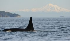 L87 Onyx with Mount Baker in the background. PC to D. Giles