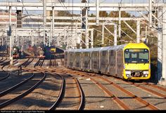 RailPictures.Net Photo: A66 Sydney Trains Reliance Rail Waratah EMU at Sydney, Australia by Peter Reading