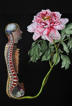 Part of the L'herbier series by Laurent Millet. Digital print/painting, 30x42cm, 2011. #anatomy #flowers #brain #skull #spine