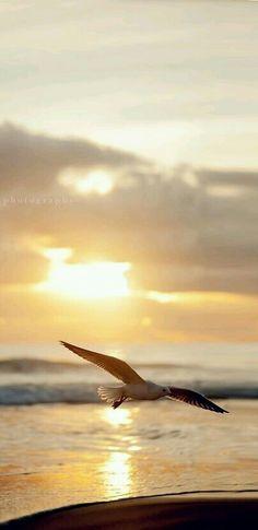 The ocean is where I find Serenity. Beautiful Birds, Beautiful World, Beautiful Pictures, Beautiful Sunrise, Nicolas Vanier, Istanbul, Beach Bodys, All Nature, Am Meer