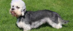 Suene Fernandes: Cães: Conheça mais 12 raças de cães incrivelmente ...