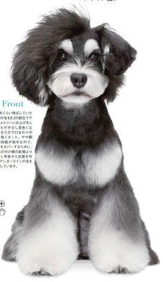 Japanese Dog Grooming Style