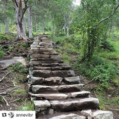 Stairway to heaven. #reiseliv #reisetips #reiseblogger #reiseråd  #Repost @annevibr with @repostapp  Made by Sherpas from Nepal  #romsdalstrappa#reiseradet#utno  #åndalsnes#rauma#nature #highlightsnorway#visitnorway  #romsdalseggen#ig_myshot  #imponerendearbeid#nesaksla  #delnorge#norway_photolovers  #daily_photoz#kings_shots#green #norsknatur#tree_magic#trees