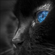 #cats Blue Eyes
