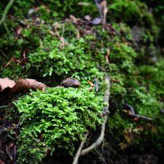 Smuk grøn mos #beautiful #outdoor #nature #landscape #bestofscandinavia #worldunion #wu_europe #igers #igdaily #igscandinavia #danmark #nofilter #vsco #vscocam #picoftheday #photooftheday #instagood #instamood #instadaily #assens #assensnatur #visitassens #visitdenmark #instapic #instagram #friluftsliv #instagramers #photooftheday #photoarena