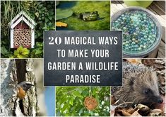 20 Magical Ways To Make Your Garden A Wildlife Paradise Plants That Attract Butterflies, Insect Hotel, Beneficial Insects, Wild Creatures, Garden Pests, Big Flowers, Natural Living, Container Gardening, Flower Gardening