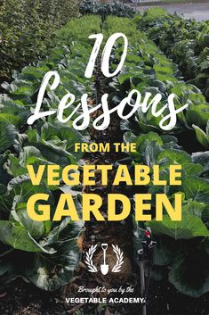 In this detailed post, we've summarized the 10 biggest lessons our garden taught us this year so you can learn along with us.
