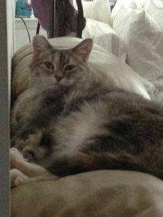 Big full bellied kitty