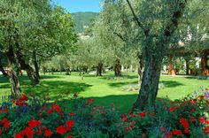 The Villa's olive groves. #olivegroves #villafeltrinelli #grandhotel #lake #garda #privatepark #garden