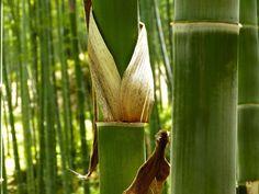 EN EL SIGLO XXI se ha comprobado que el bambú puede ser igual de resistente que…
