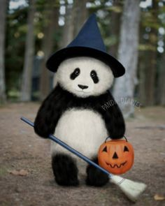"1,728 Likes, 27 Comments - Emma(エマ) (@panda_diaries_) on Instagram: ""Happy halloween (continued) . . . Thank you for tagging me when reposting !❤ #panda #pandababy…"""