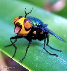 Bizarre don't you love the little tongue? all gods creatures, strange creatures Weird Insects, Cool Insects, Bugs And Insects, The Animals, Funny Animals, Bizarre Animals, Weird Creatures, All Gods Creatures, Beautiful Bugs
