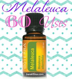 60 Uses for Melaleuca / Tea Tree Essential Oil {DoTerra} - Sarah Titus ~ Saving Money Never Goes Out of Style