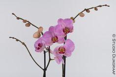 www.studiodijkgraaf.nl Productfotografie Productfoto Orchidee