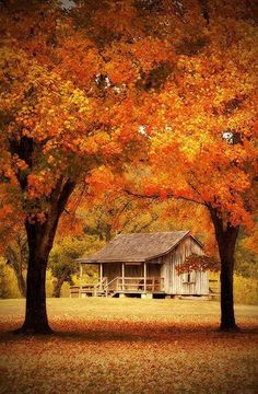 Lovely old cabin where a family, or generations, probably lived and enjoyed the Autumn weather and colors.